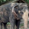 Село слонів в паттаї на річці квай: фото і ціни, як дістатися до села слонів. »Карта мандрівника