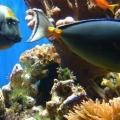 Кращі коралові рифи в шарм-ель-шейху, єгипет: фото »карта мандрівника