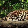 Відкритий зоопарк као кпо в паттайя, таїланд: як дістатися до зоопарку самостійно і він на мапі, ціни і фото, відгуки. »Карта мандрівника